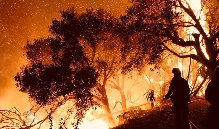 حريق في احراج بلدة الدورة العكارية