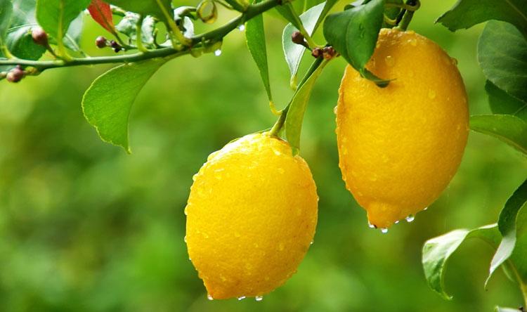 """فوائد """"مذهلة"""" لليمون!"""
