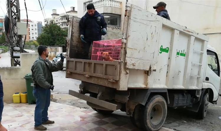 بلدية صور تلتقط الكلاب الشاردة