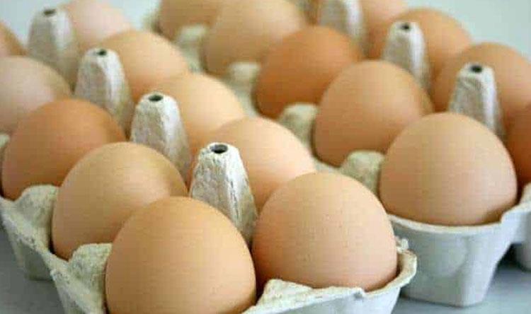 بيض الدجاج لإعداد دواء ضد الإيبولا
