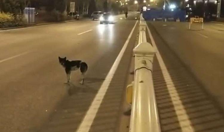 بالفيديو: كلب ينتظر صاحبته المتوفية!