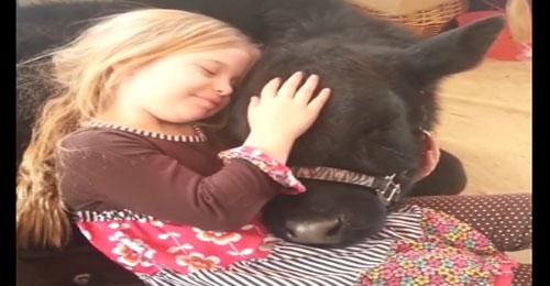 بالفيديو: طفلة تُدخل عجلاً خلسة إلى المنزل كحيوانٍ أليف