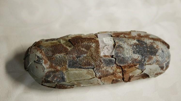 بالصورة: بيضة متحجرة لسمكة قرش عمرها 310 ملايين عام