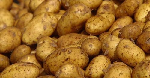 بالفيديو- مزارعو البطاطا يتلقون ضربة قاضية: البطاطا المصرية ستجتاح الاسواق