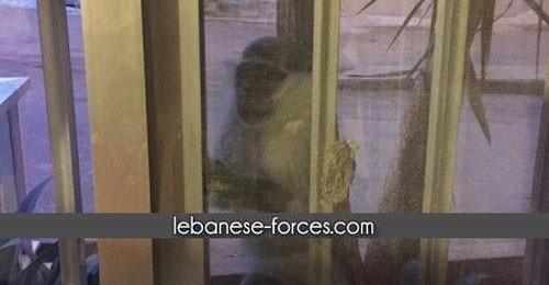 """بالصور- خاص موقع """"القوات"""": 3 إصابات ضحية قرد طليق في زوق مصبح"""