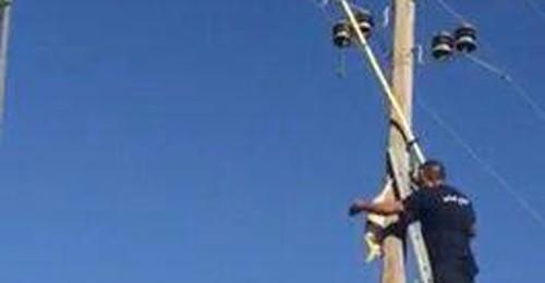 بالصور: إنقاذ قطة علقت في أعلى عمود الكهرباء في زحلة!!