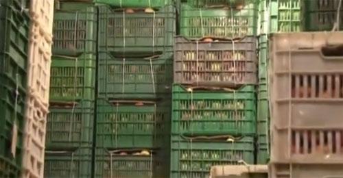 بالفيديو: 750 ألف صندوق تفاح مكدسة في برادات بشري وكيروز يطالب بالحلول