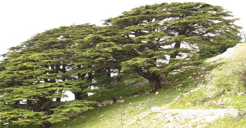 من دولة لبنان الكبير إلى دول كبرى في الوطن الصغير؟