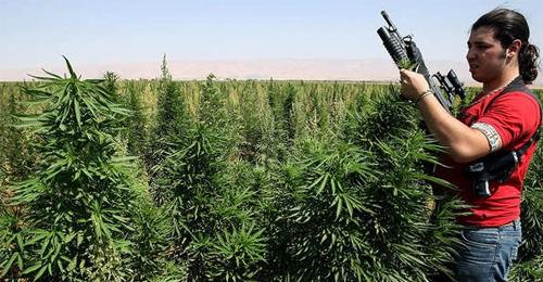 إمبراطورية المخدرات في لبنان