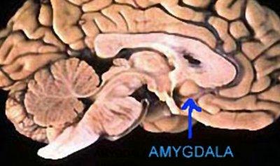 بين الشهيق والزفير ما الذي يؤثر على الذاكرة؟