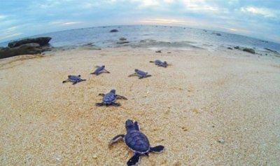 المناخ يتغيّر … وكذلك السلاحف