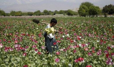 تعاطي المخدرات في إيران في إرتفاع مطّرد.. والأرقام مقلقة!