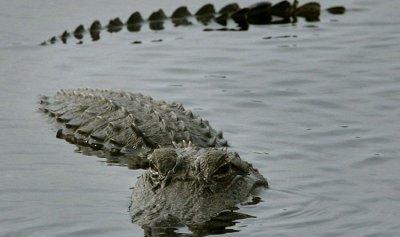 تمساح يلتهم رجلاً أمام ابن أخيه