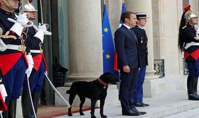 """كلب ماكرون… """"عِملا هون"""""""