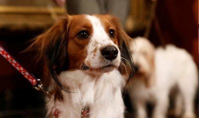 """الكلاب تشخّص """"كورونا"""""""