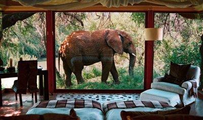 محكمة أميركية تنظر في دعوى قضائية من فيل ضد حديقة الحيوان