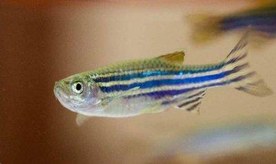 زيت السمك يكشف عن أسرار جديدة