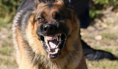 كلاب شاردة في صور تهاجم امرأة