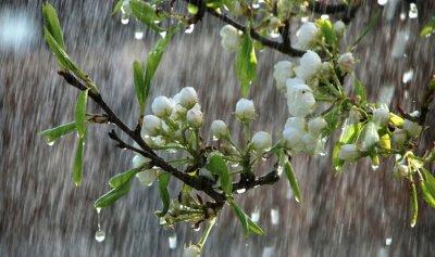 الأمطار مستمرة للأيام القادمة