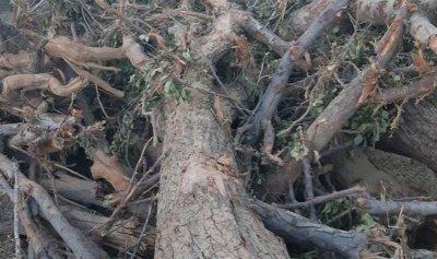 أهالي طفيل اشتكوا من أعمال جرف بساتين الأشجار
