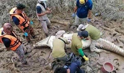 عثروا عليه داخل بطن تمساح
