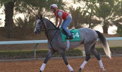 السعودية تستضيف سباقات خيول عالمية
