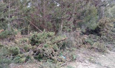مجهولون قطعوا أشجاراً حرجية في عكار