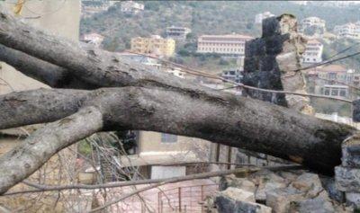 سقوط شجرة معمرة في حاصبيا جراء الرياح القوية