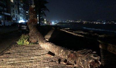 بالصورة: الامطار تقتلع الاشجار في صور