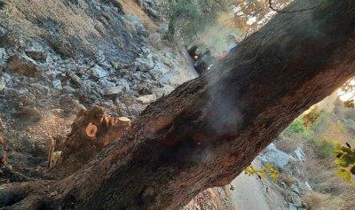 حريق أعشاب وأشجار في دير القمر