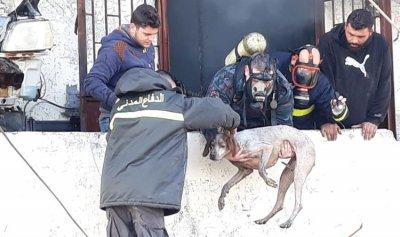 انقاذ كلبتي صيد بحريق صيدا