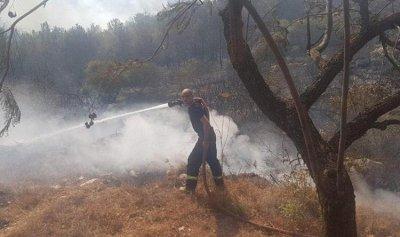 حريق في حرج زغرتغرين
