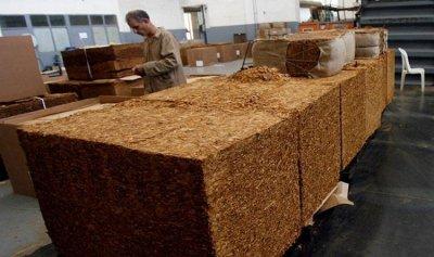 الريجي تتسلم محاصيل الشمال من التبغ الاربعاء