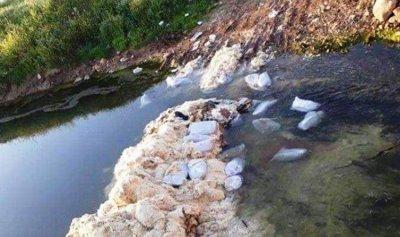 طيور نافقة في مجرى نهر الأسطوان بفعل فاعل