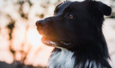 بالفيديو: كلبة تنقذ أخرى من الموت بتدخل خاطف