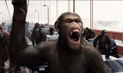 القرود حولت حياة الهنود الى جحيم