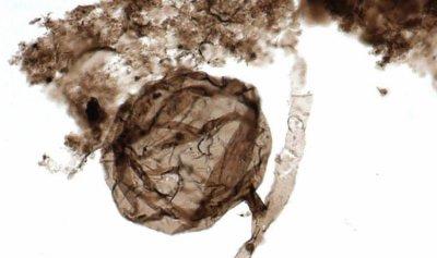 أحفورة من مليار سنة تفسر ظهور الحياة على الأرض