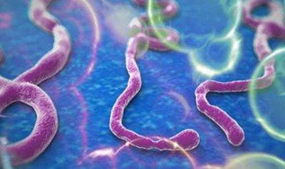 الإيبولا ينتقل إلى البلاد النائية