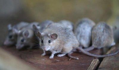 """""""الغميضة"""" لعبة الفئران المفضّلة"""