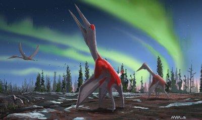 """أضخم """"زاحف"""" طائر عاش قبل 77 مليون سنة"""