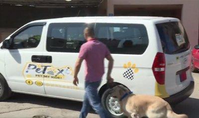 بالفيديو: في لبنان… تاكسي للكلاب والقطط!
