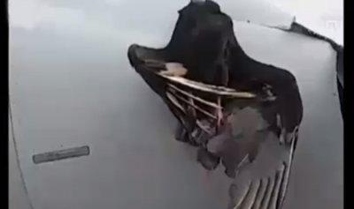 بالفيديو: طائر وطائرة في هبوط استثنائي