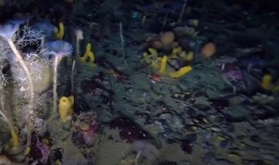 """بالفيديو: """"دجاج مقطوع الرأس"""" يجتاح البحر"""