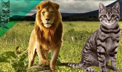 هل يمكن الجَمع بين الحيوانات إِلفةً ومُصاحَبة؟