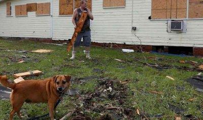 بعد إعصار فلوريدا… الكلاب المدربة تشارك في البحث عن ناجين