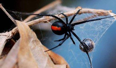 العلم يحل لغز قوة شباك العنكبوت