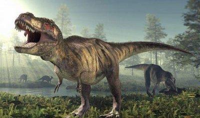 دراسة تكشف سر قصر يدي أشهر ديناصور