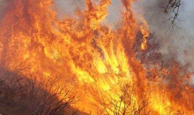 29 قتيلًا بحرائق كاليفورنيا!