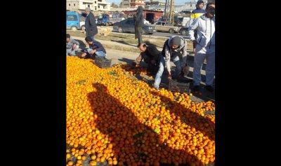 مزارعو الحمضيات قطعوا طريق العبدة