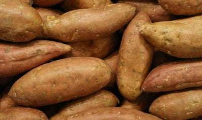 البطاطا الحلوة تفيد مرضى السكري
